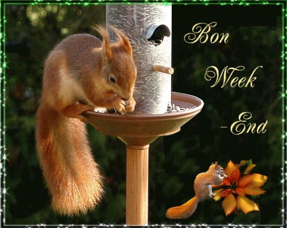 Bon Week-end!  (écureuil)